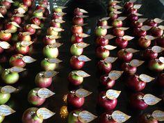 Fall wedding in the peak of apple season!