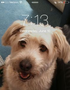Your dog's photo is their cellphone background.