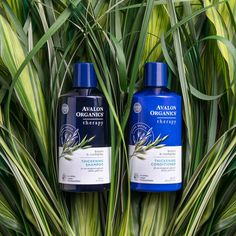 Harness nature's power to build and strengthen hair with Biotin, Saw Palmetto, and Quinoa Protein. A bottle of Avalon Organics® Biotin B-Complex Thickening Shampoo & Conditioner works wonders for strengthening strands Treat your hair to the simplicity of wholesome, organic ingredients.
