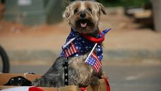 These dogs are ready for fun in the sun, parades, and barbecues that make Independence Day such a blast! They're showing off their patriotic side!