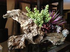succulent on driftwood Driftwood Furniture, Driftwood Projects, Driftwood Ideas, Driftwood Sculpture, Driftwood Art, Flower Arrangement Designs, Floral Arrangements, Driftwood Centerpiece, Succulent Centerpieces