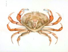 Animal - Crustacean - Crab 1