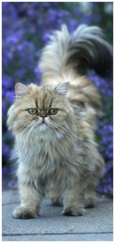 All Animals Are Equal, Happy Moments, Pet Store, Love And Light, Make You Smile, This Is Us, In This Moment, Grumpy Cats, Nature