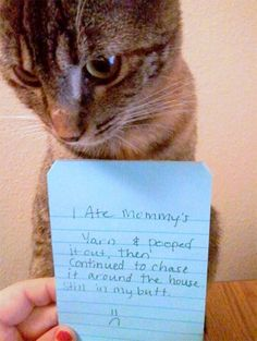 27 hilarious cat shaming moments. I couldn't stop laughing.