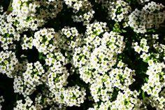 Las Flores Que Mejor Se Adaptan A Su Jardín
