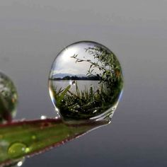 The world in a drop of water.