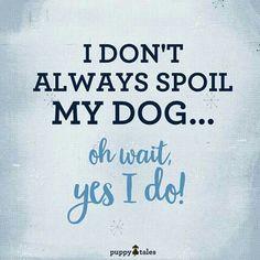 Spoil my dog