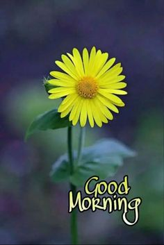 good morning & good morning quotes & good morning & good morning quotes inspirational & good morning quotes for him & good morning wishes & good morning greetings & good morning quotes funny & good morning beautiful Very Good Morning Images, Good Morning Images Flowers, Good Morning Image Quotes, Morning Quotes Images, Latest Good Morning, Good Morning Images Download, Good Morning Picture, Good Morning Greetings, Morning Pictures