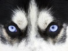 Wolf: You have the eyes of a wolf! You are the silent predator. The one that spots his prey in the shadows and follows him silently, waiting for the perfect time to jump into the moonlight and sink your teeth in.