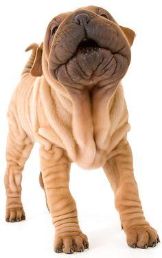 wrinkles!!!!!! I love wrinkles!