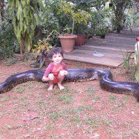 This Snake Was Caught On Video Eating A...
