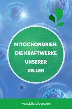 Wir sprechen in diesem Interview über die Mitochondrien, die Kraftwerke der Zelle. Warum die Erhaltung Ihrer Funktionsfähigkeit ganz zentral ist, wenn es um die Erhaltung der Gesundheit geht. Warum diese kleinen Zellbestandteile so empfindlich sind, Welche Umweltfaktoren schädigend auf Mitochondrien wirken und was du tun kannst um deine Mitos gesund zu erhalten. Interview, Chart, Paleo Food, Conservation, Holistic Practitioner, Health And Wellbeing