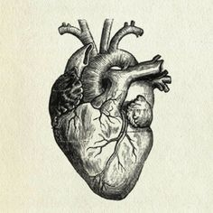 favorite black and white illustration of heart