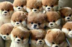 Can you find the real dog?