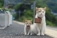 travelling cats #travel #travellingcats #cats