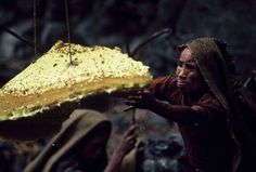Gurung men in Nepal expose themselves to extreme danger to harvest the nests of the world's largest honeybee.