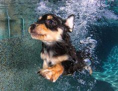 Fotógrafo cria série divertida com cachorros embaixo d'água | Estilo