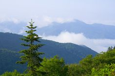 The Great Smoky Mountains of Tennessee near Gatlinburg, Tennessee