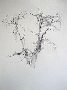 Tim Allen Lawson, tree sketch