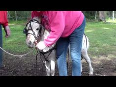 How to put a harness on a mini horse and connect to cart //Awesome. I need to watch this so we can use it for Remy. Mini Horse Cart, Mini Goats, Miniature Ponies, Mini Donkey, Mini Horses, Horse Anatomy, Mini Stuff, Horse Shoes, Horse Tips