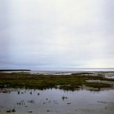 looks like the salt marsh in southern Louisiana Landscape Photos, Landscape Paintings, Landscapes, Salt Marsh, Special Pictures, Natural Phenomena, Something Beautiful, Places To Travel, Southern Accents