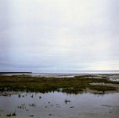 looks like the salt marsh in southern Louisiana