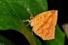 butterfly - www.praveengnair.com
