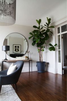 To create an illusion of a tall ceiling add a floor to ceiling big plant in one corner.