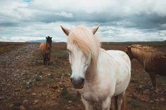 Iceland horses by www.lasonrisadebeatriz.es