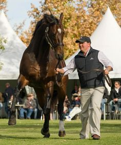 REDOUTES CHOICE Redoutes Choice Was A Multiple Group One Winning Australian Thoroughbred Racehorse And Is
