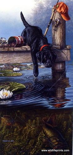 This black lab pup is so excited about the fish in the water that he knocks over the bait and rods to try and get after them. Hunting Art, Hunting Dogs, Illustration Art, Illustrations, Lab Puppies, Fish Art, Wildlife Art, Animal Paintings, Dog Art