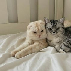 Cute Baby Cats, Cute Little Animals, Kittens Cutest, Cats And Kittens, Catty Noir, Cat Aesthetic, Japanese Aesthetic, Korean Aesthetic, Beige Aesthetic