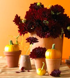 Potted Pumpkins, Weathered terra-cotta pots give this simple display a boost. Set pumpkins in or atop them, and pair them with an explosion of rich burgundy dahlias accented with pumpkin leaves.