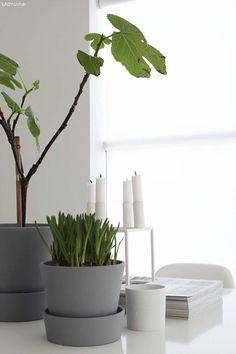 Diy - ikea ingefära pots painted with grey green plants, scandinavian home, House Plants Decor, Plant Decor, Interior Plants, Interior And Exterior, Cactus Plante, Scandinavian Living, Green Plants, Home Decor Inspiration, Decoration