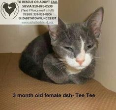 SUPER URGENT! TO BE PTS TODAY IF NOT RESCUED/FOSTERED/ADOPTED.