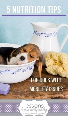 Jennifer Adolphe, PhD, RD answers questions, about the specific needs of senior dogs and dogs with mobility problems. Here are her 5 best nutrition tips to keep your dog healthy. dog nutrition tips Dog Nutrition, Animal Nutrition, Nutrition Quotes, Bone Diseases, Bone Health, Pet Health, Homemade Dog Food, Medical Conditions, Dogs