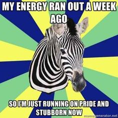 If you've kept going because you didn't have any other choice... | Signs You Might Be A Zebra