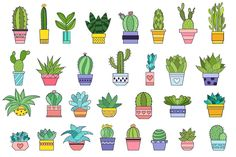 Succulent and Cactus Floral clipart Saftiges und Kaktus-Blumen cli Succulents Drawing, Cactus Drawing, Cactus Painting, Plant Drawing, Cactus Art, Cactus Flower, Cacti And Succulents, Cactus Plants, Mini Cactus