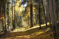 Lincoln National Forest near Cloudcroft, New Mexico