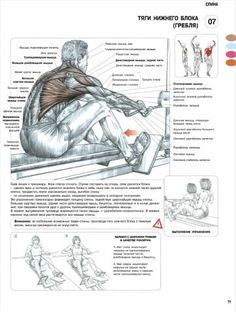 упражнения на спину | VK