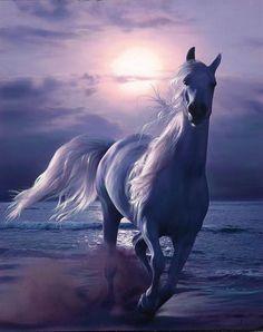 Арабский скакун - одна из самых красивых пород лошадей