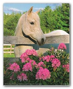 White Morgan Mare Horse with Flowers Wall Decor Art Print Poster Horse Posters, Animal Posters, Framed Art Prints, Poster Prints, Framed Wall, Horse Flowers, Mare Horse, Horse And Human, Horse Wall Art