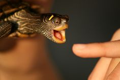 turtle bite