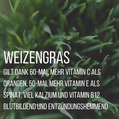 Auch Weizengras wird zu den sogenannten Superfoods. Hier erfahrt ihr was es wirklich kann!
