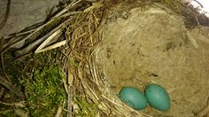 Ptasie gniazdo
