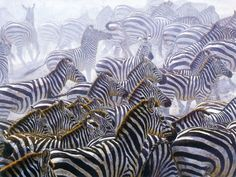 Very beautiful seen, where all the Zebras are together very attractive pix