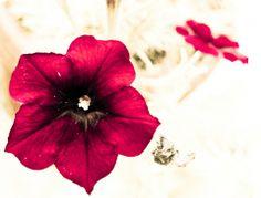 KPIX | Fiore rosso