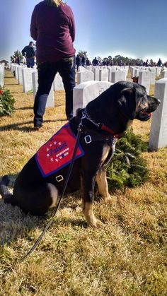 Liberty, service dog in training, at the Laying of the Wreaths. Dec. 2014 Jacksonville, FL.