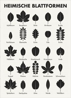Native leaf shapes determine trees by Iris Luckhaus- Heimische Blattformen Bäume bestimmen by Iris Luckhaus - Logo Fleur, Animals Tattoo, Animal Tracks, Chestnut Horse, Tree Leaves, Apple Tree, Outdoor Survival, Leaf Shapes, Stampin Up