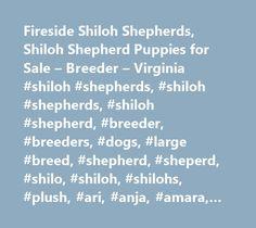 Fireside Shiloh Shepherds, Shiloh Shepherd Puppies for Sale – Breeder – Virginia #shiloh #shepherds, #shiloh #shepherds, #shiloh #shepherd, #breeder, #breeders, #dogs, #large #breed, #shepherd, #sheperd, #shilo, #shiloh, #shilohs, #plush, #ari, #anja, #amara, #puppy, #puppies, #breeder, #breeders, #fireside #shioh #shepherds,virginia,va…